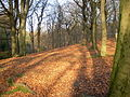 Tandle Hill Country Park, Royton - geograph.org.uk - 618299.jpg