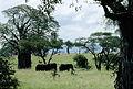 Tanzanie Meru 01.jpg
