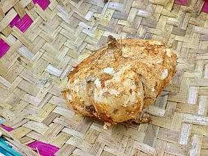 Tapioca - Cassava