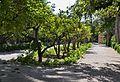 Tarongers al parc municipal d'Elx.jpg