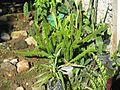 Tawangmangu 2009 Bennylin 059.jpg