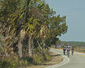 Team Cycling By Carole Robertson.jpg
