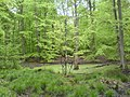 Teich im Wald bei Warmbronn - geo.hlipp.de - 10249.jpg