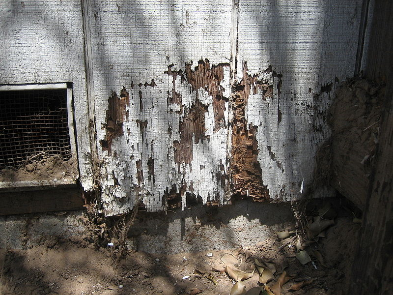 How Can You Treat Termites In Your Home?