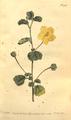 The Botanical Magazine, Plate 436 (Volume 13, 1799).png