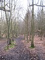 The Greensand Way in Crockhamhill Common (2) - geograph.org.uk - 1754280.jpg