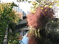 The River Ravensbourne (4) - geograph.org.uk - 1081504.jpg