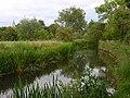 The River Wylye, Steeple Langford - geograph.org.uk - 478782.jpg
