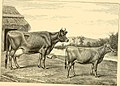 The breeds of live stock, and the principles of heredity (1887) (14594918147).jpg