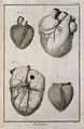 The heart and its muscle fibres, after Senac. Engraving by B Wellcome V0007847.jpg