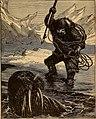 The walrus hunter.jpg