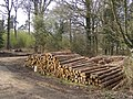 Timber stack in the Hasley Inclosure, New Forest - geograph.org.uk - 157265.jpg