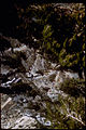 Timpanogos Cave National Monument TICA2274.jpg