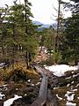 Tongass National Forest 017.jpg