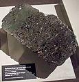 Torlesse Supergroup sandstone containing fossils, Otago Museum.jpg