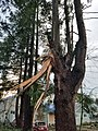 Tornado in Washington Dec 2018 damage 1.jpg