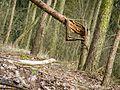 Totalreservat Grumsiner Forst.jpg