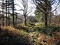 Track in Lynwode Wood - geograph.org.uk - 1123769.jpg