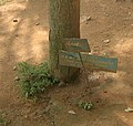 TreeHebbalStoltenberg.jpg