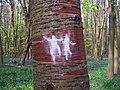 Tree dancers (4551749325).jpg