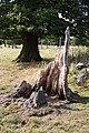 Tree stump - geograph.org.uk - 1500911.jpg