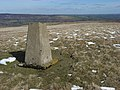 Trig point, Bollihope Carrs - geograph.org.uk - 380536.jpg