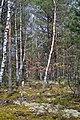 Troianivka Manevytskyi Volynska-Kruchene ozero nature reserve-by the way to the lake.jpg
