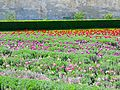 Tuileries Garden, April 2015 001.jpg