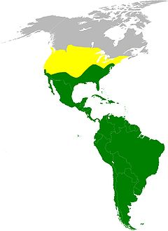 Approximate range map: * Yellow – summer-only range * Green – year-round range