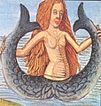 Twin-tailed Siren or Mermaid, Hortus Sanitatis.jpg