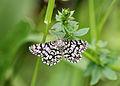 Unbekannter Schmetterling 6631.jpg