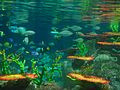 Underwater World in Hong Kong Ocean Park 海洋公園的水下世界 - panoramio.jpg