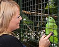 Unidentified amazona -Birdworld, Farnham, Surrey, England -cage-8a.jpg