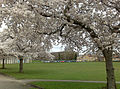 University Buildings from Under a Cherry Tree - geograph.org.uk - 1233870.jpg