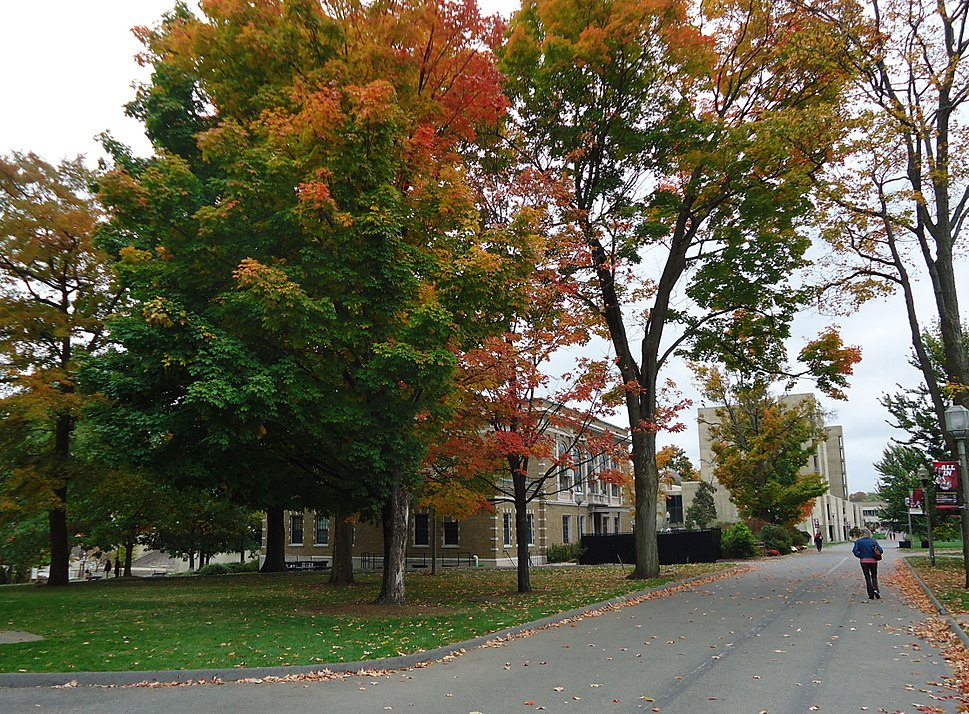 University of Massachusetts at Amherst campus view trees and pathway