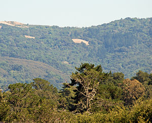 Corte Madera Creek (San Mateo County, California) - Shot looking southeast from Jasper Ridge's Sun Field Station up the Corte Madera Creek watershed with Russian Ridge on the right and Montebello Ridge on the left.