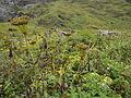 Valley of Flowers 36.JPG