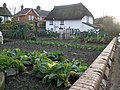 Vegetable plot, Greenway, Woodbury - geograph.org.uk - 1084828.jpg