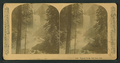 Vernal Falls, 630 feet. Cal, by Littleton View Co. 4.png