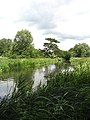 View along the River Bure - geograph.org.uk - 863935.jpg