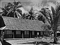 View of a building with thatch roofing set amongst palm trees (AM 75227-1).jpg