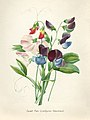 Vintage Flower illustration by Pierre-Joseph Redouté, digitally enhanced by rawpixel 18.jpg