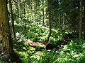 Vosges forest near Bussang.jpg
