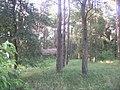 Włocławek, Poland - panoramio (9).jpg