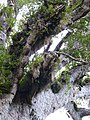 Waipoua Forest, Kauri walks - Tane Mahuta (1).jpg