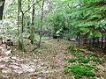 Waldweg - panoramio (37).jpg