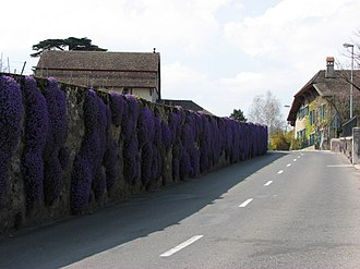Duillier - Flowers and buildings in Duillier village