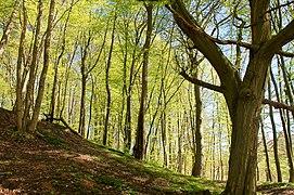 Wallensteingraben - Landschaftsschutzgebiet.jpg
