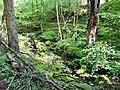 Wanderweg im Schweinbachtal zwischen Hirsau und Oberreichenbach - panoramio (2).jpg