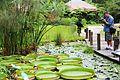 Water Plants Park in Green World Ecological Farm.jpg